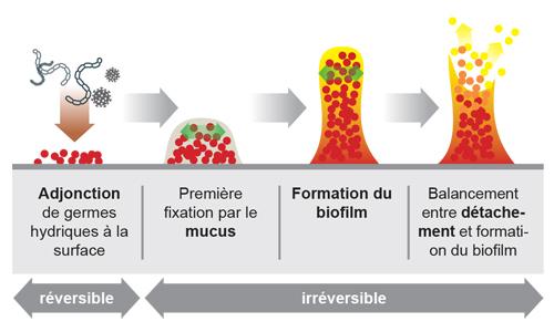 Revêtement de surface antibactérien permanent